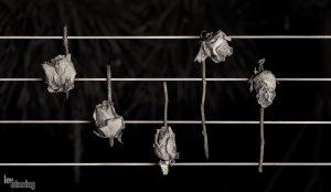 Waltz of dead flowers