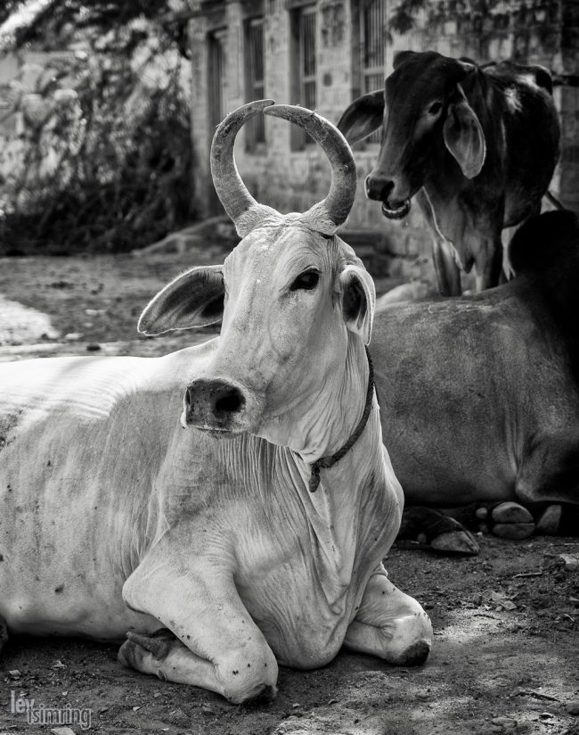 Chadelao, India (2014)