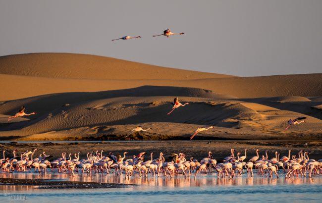 Walvis Bay, Namibia (2018)