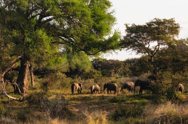 Kruger, South Africa (2018)