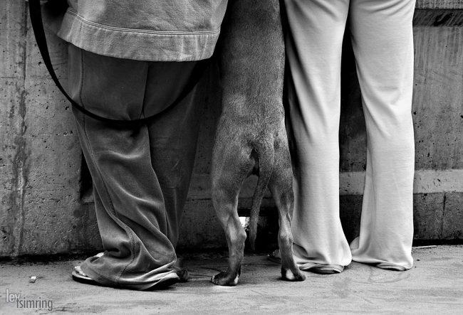 Six legs San Diego, USA (2007)