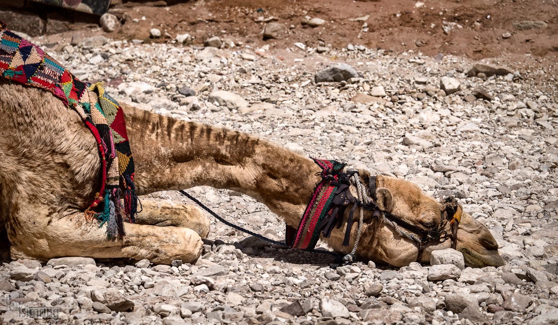 Petra, Jordan (2016)