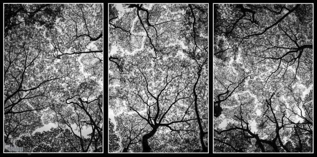 Treeptych