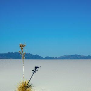New Mexico, USA (2005)