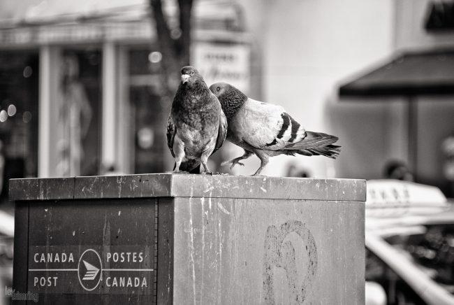 Vancouver, Canada (2011)