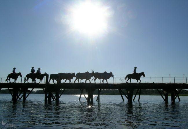 Pantanal, Brazil (2004)