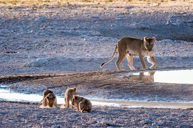 Etosha, Namibia (2018)