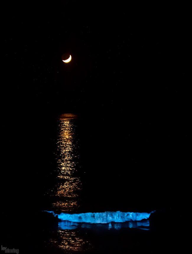 Bioluminescence <p> San Diego, USA (2020)