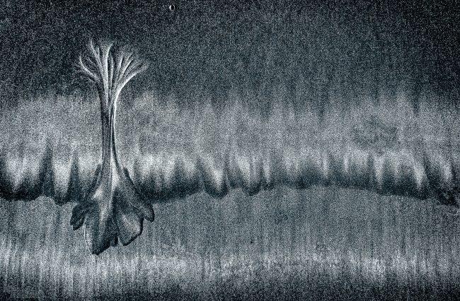 Alluvial forest <p> La Jolla, California (2020)