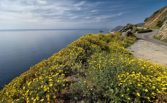 Corsica (2008)
