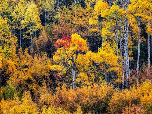 Bishop Creek Canyon, California (2020)